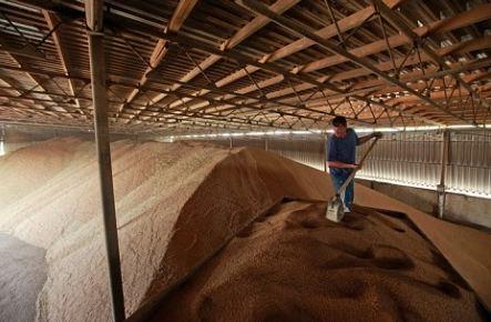 Хранит зерно в элеваторе транспортер т4 бампер передний